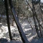 北の丸・本丸間空堀(堀切)2